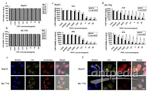 性杀死癌细胞的细胞实验结果和荧光共聚焦成像结果